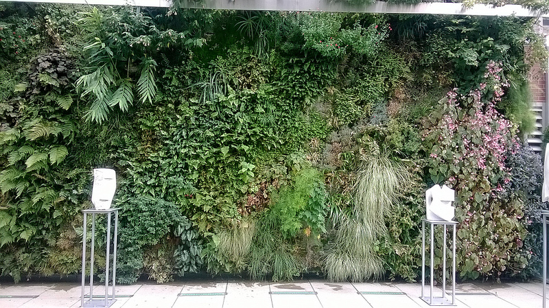 How to make vertical garden at home?