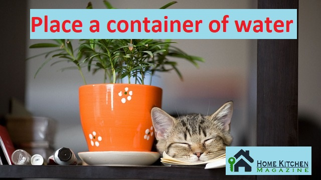 Caring for ornamental plants - Place a container of water