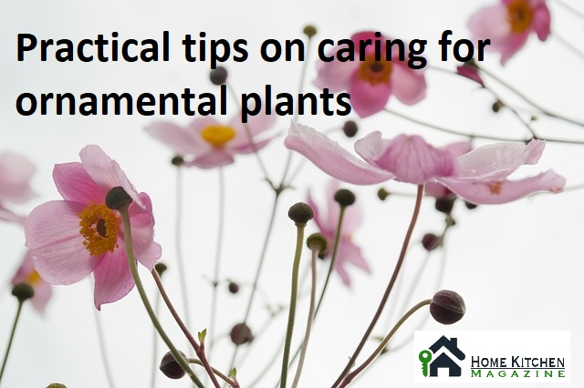 Caring for ornamental plants