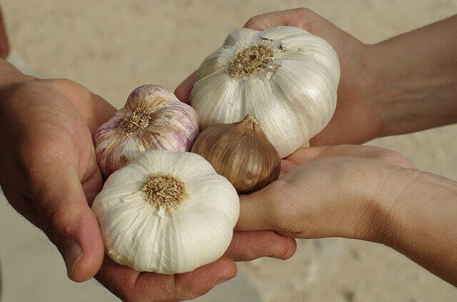 How to get rid of the smell of garlic on hands