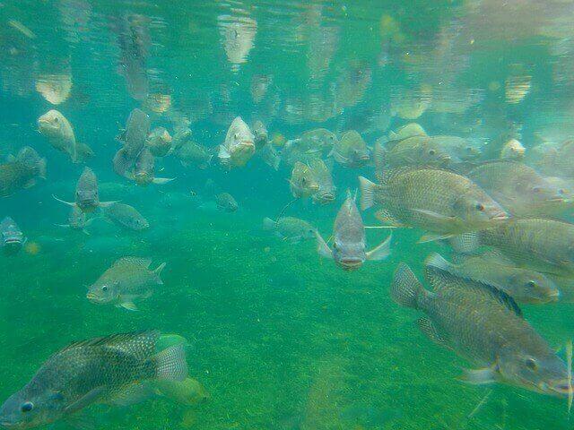 Benefits Of Fish Farming