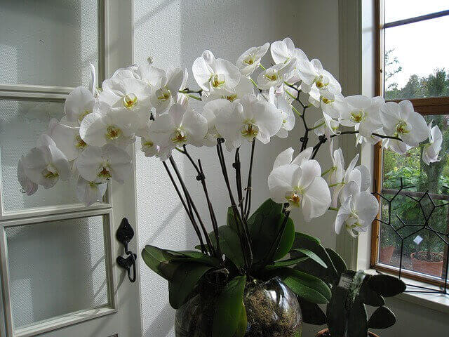 What Is The Best Way To Grow Orchids in pot