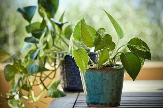 Fast Growing Houseplants