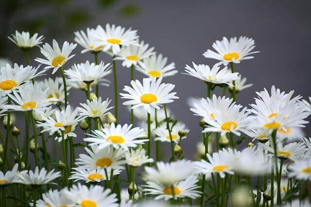 Medicinal Plants That Can Be Grown at Home